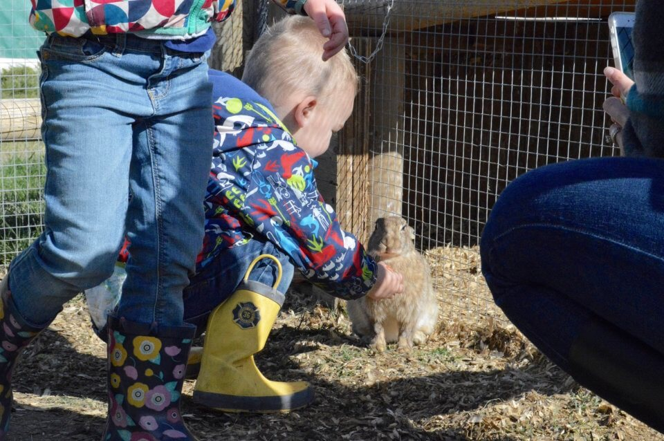 toddler petting a bunny